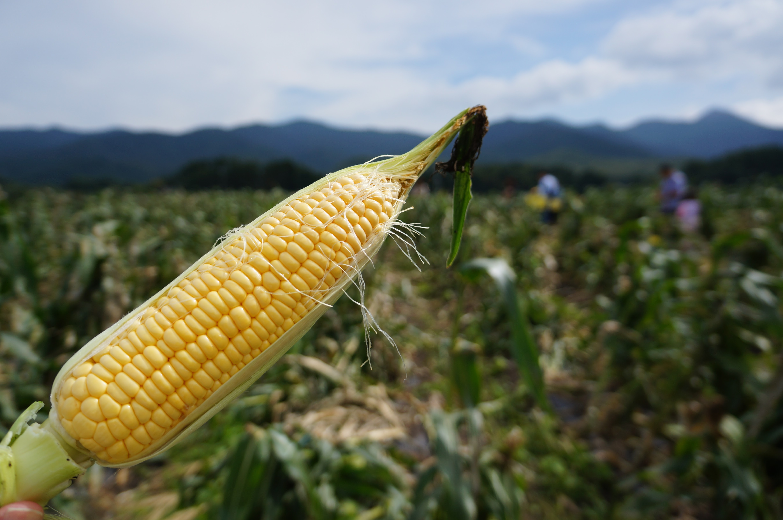 corn_up