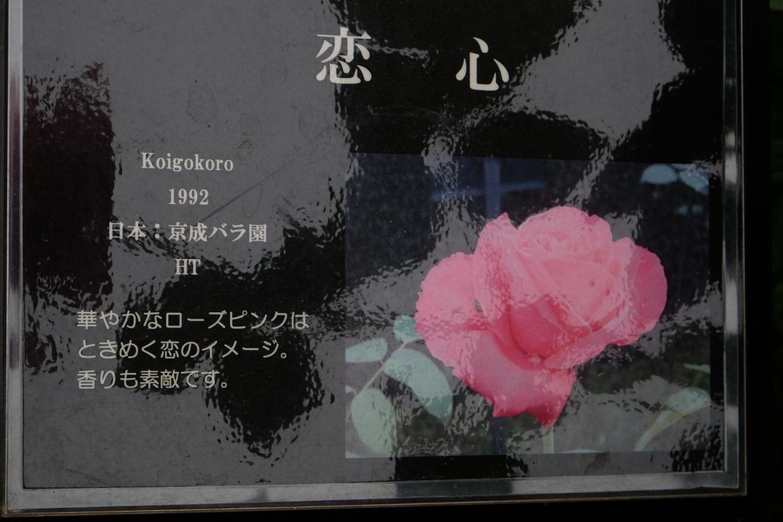 koigokoro