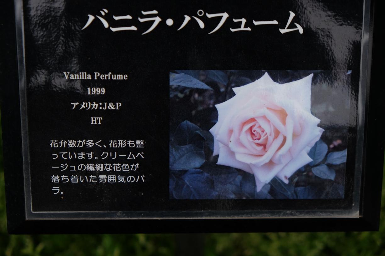 Vanilla_Perfume