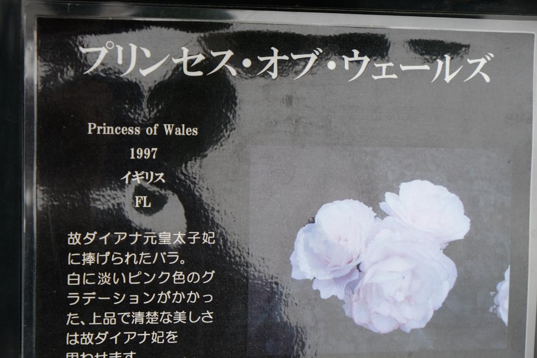 princess_of_wales