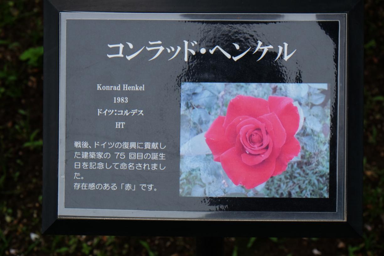Konrad_Henkel