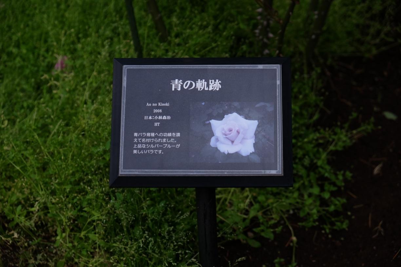 aonokiseki