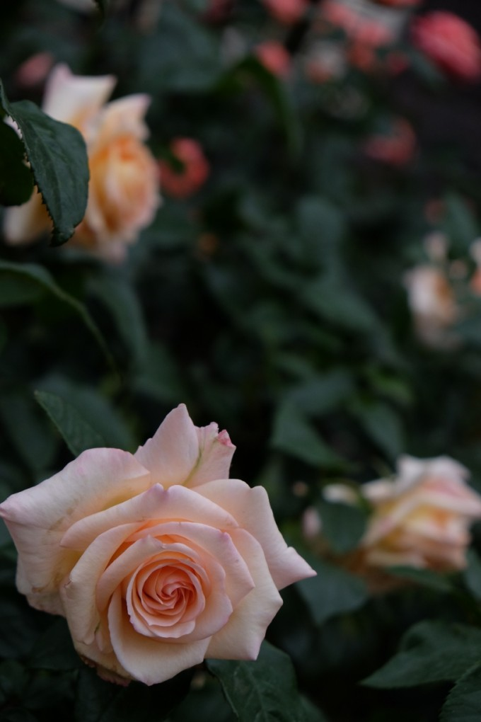 Vanilla_Perfume2