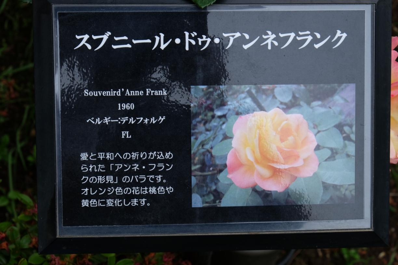 Souvenird_Anne_Frank